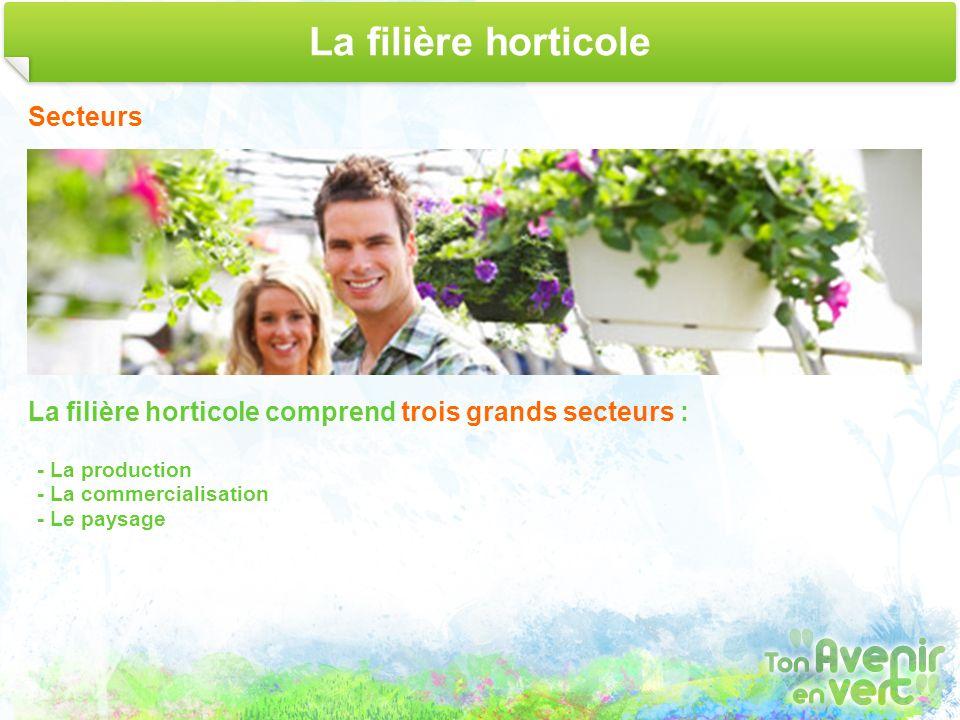 La filière horticole Secteurs La filière horticole comprend trois grands secteurs : - La production - La commercialisation - Le paysage