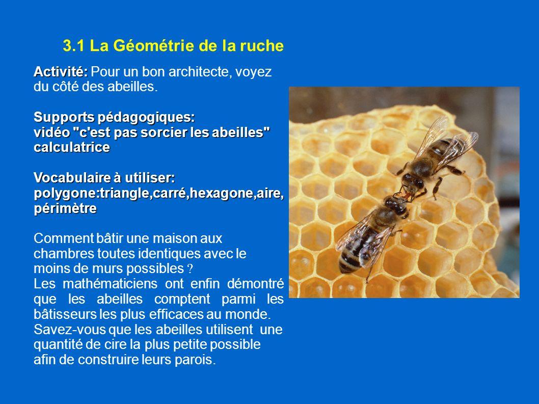 3.1 La Géométrie de la ruche Activité: Activité: Pour un bon architecte, voyez du côté des abeilles. Supports pédagogiques: vidéo