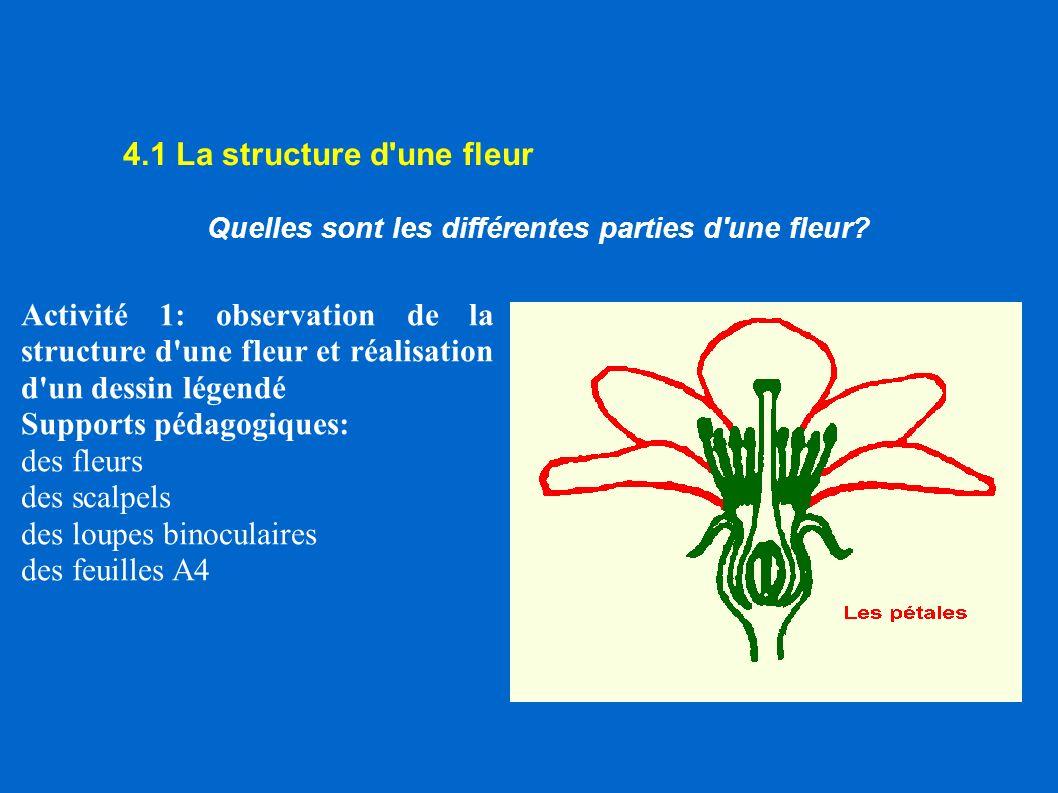 4.1 La structure d'une fleur Quelles sont les différentes parties d'une fleur? Activité 1: observation de la structure d'une fleur et réalisation d'un