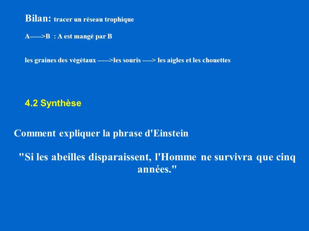Bilan: tracer un réseau trophique A----->B : A est mangé par B les graines des végétaux ----->les souris ----> les aigles et les chouettes 4.2 Synthès