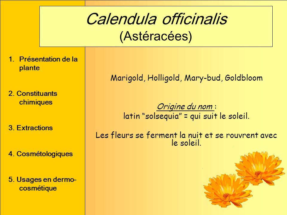 Marigold, Holligold, Mary-bud, Goldbloom Origine du nom : latin solsequia = qui suit le soleil. Les fleurs se ferment la nuit et se rouvrent avec le s
