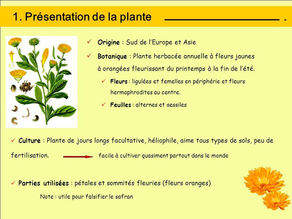 1. Présentation de la plante Origine : Sud de lEurope et Asie Botanique : Plante herbacée annuelle à fleurs jaunes à orangées fleurissant du printemps