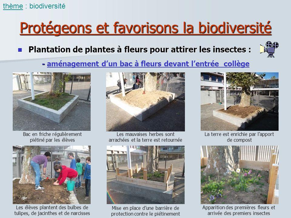 Protégeons et favorisons la biodiversité Plantation de plantes à fleurs pour attirer les insectes : Plantation de plantes à fleurs pour attirer les in