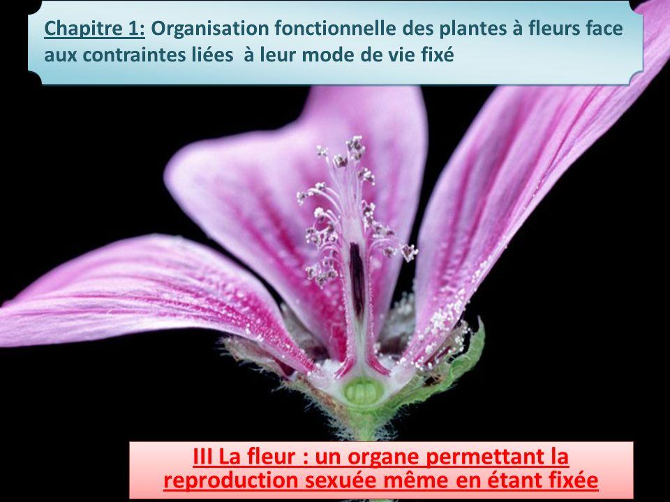 Chapitre 1: Organisation fonctionnelle des plantes à fleurs face aux contraintes liées à leur mode de vie fixé III La fleur : un organe permettant la
