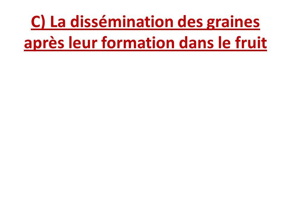 C) La dissémination des graines après leur formation dans le fruit