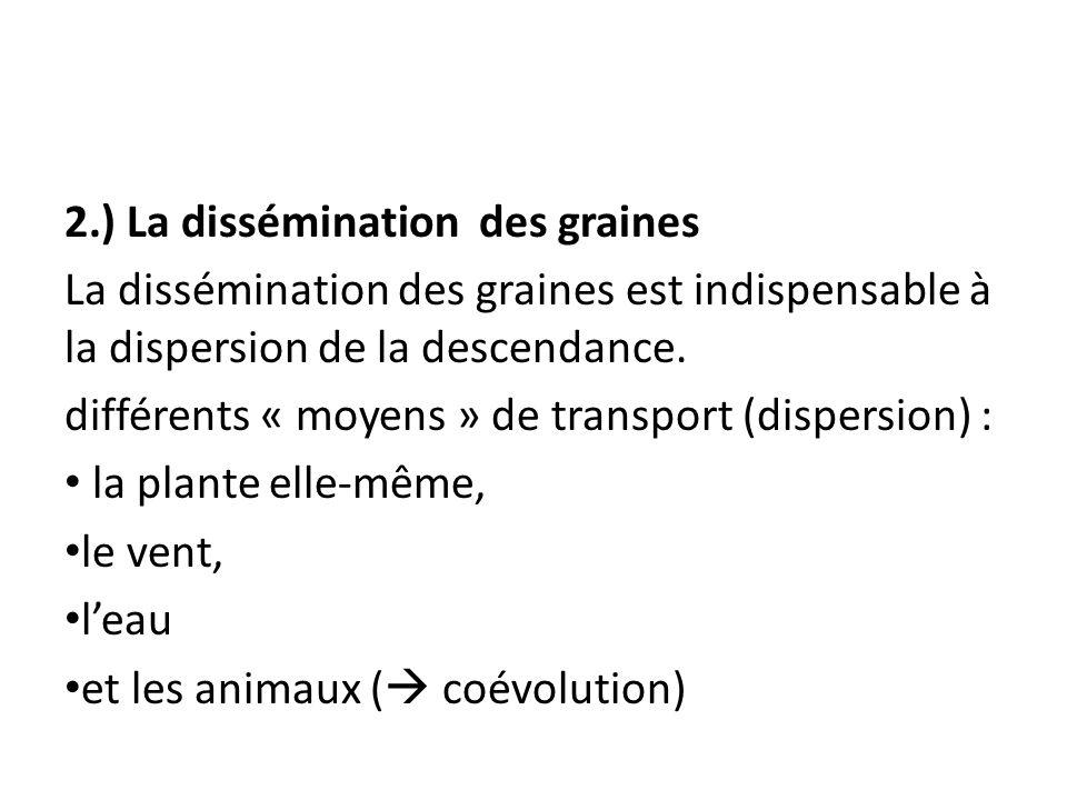 2.) La dissémination des graines La dissémination des graines est indispensable à la dispersion de la descendance. différents « moyens » de transport