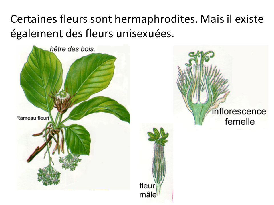 Certaines fleurs sont hermaphrodites. Mais il existe également des fleurs unisexuées.