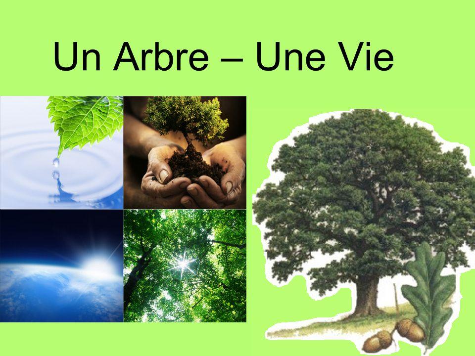 Au 17 e siècle, la vallée du Saint-Laurent, notamment la région de Donnacona était couverte de forêts de chênes et elles étaient habitées par des milliers décureuils.