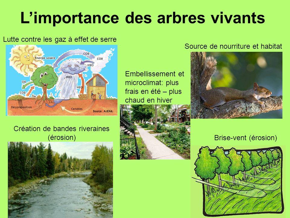 Limportance des arbres vivants Lutte contre les gaz à effet de serre Création de bandes riveraines (érosion) Embellissement et microclimat: plus frais