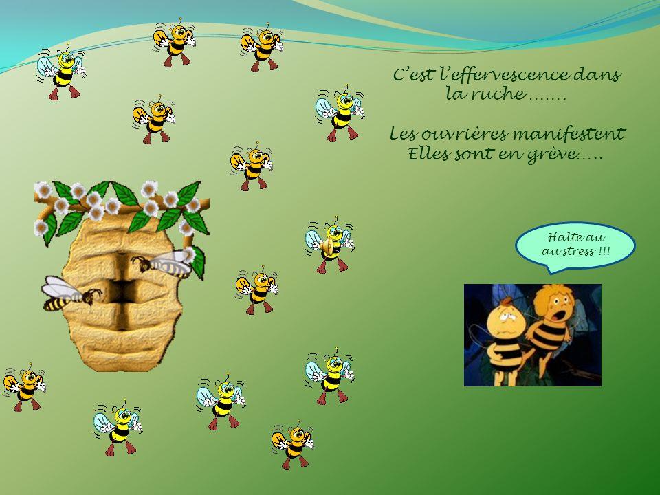 Cest leffervescence dans la ruche …….Les ouvrières manifestent Elles sont en grève…..