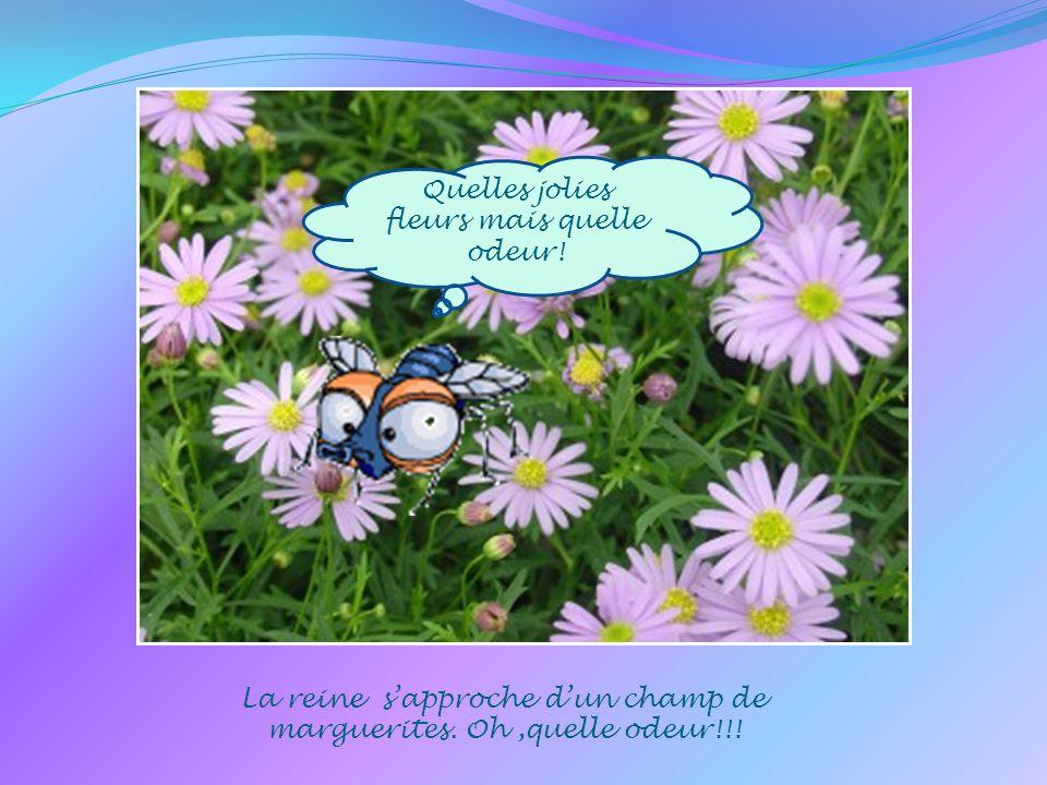 Quelles jolies fleurs mais quelle odeur.La reine sapproche dun champ de marguerites.