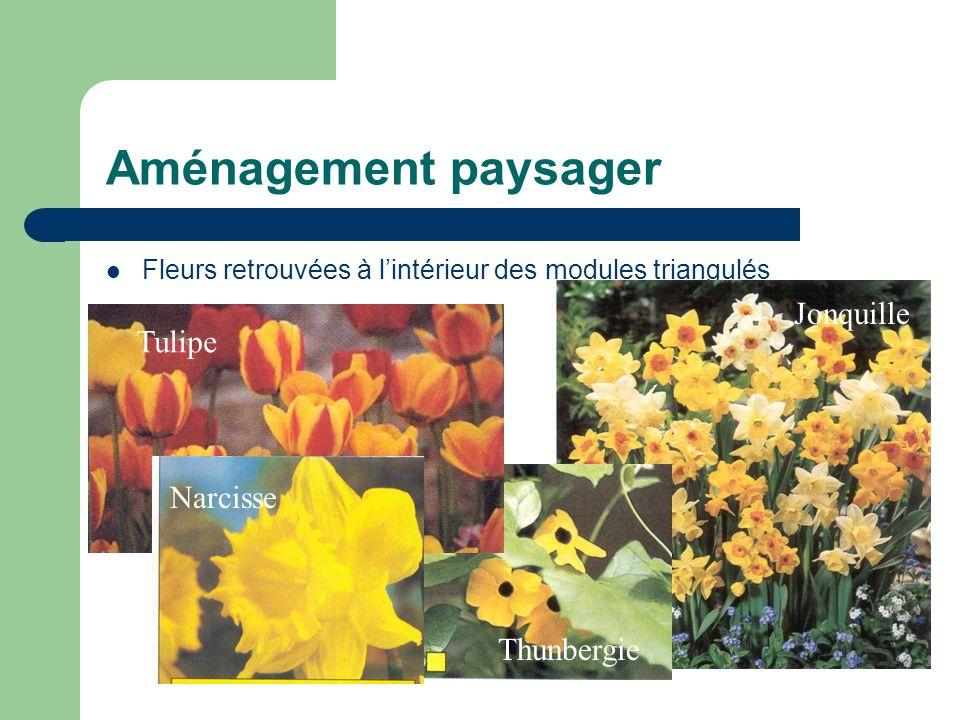 Aménagement paysager Fleurs retrouvées à lintérieur des modules triangulés Tulipe Narcisse Thunbergie Jonquille