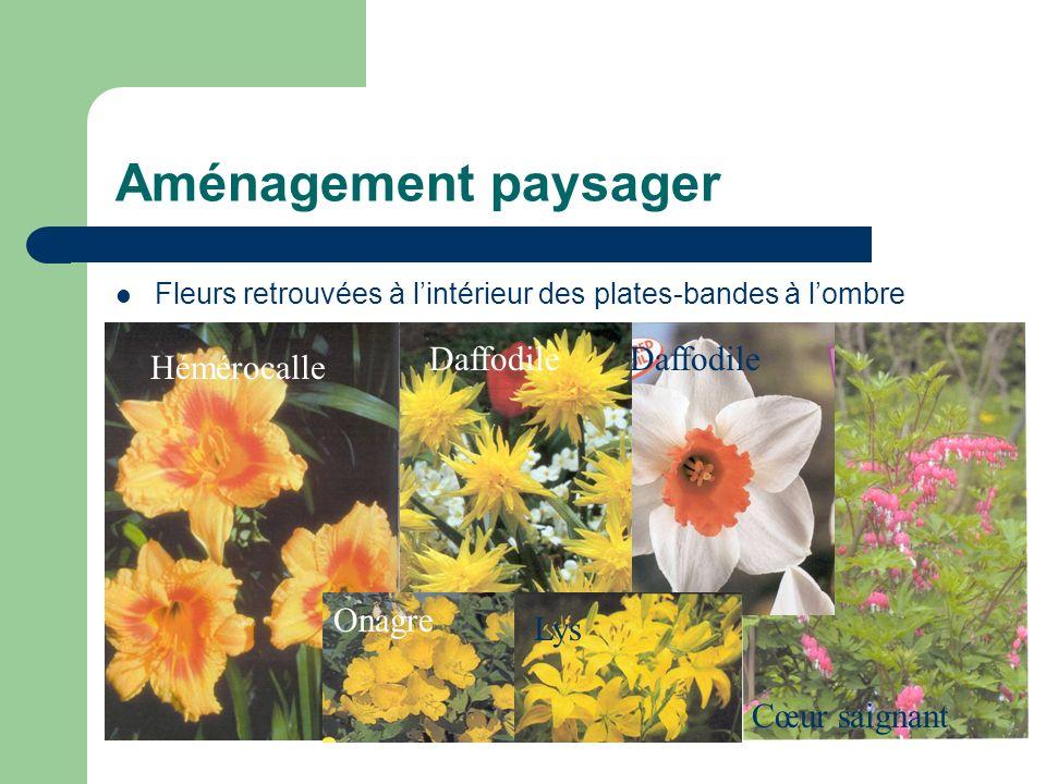 Aménagement paysager Fleurs retrouvées à lintérieur des plates-bandes à lombre Hémérocalle Daffodile Cœur saignant Lys Onagre