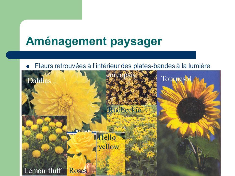 Aménagement paysager Fleurs retrouvées à lintérieur des plates-bandes à la lumière Dahlias Lemon fluffRoses Hello yellow Tournesol Rudbeckie coréopsis