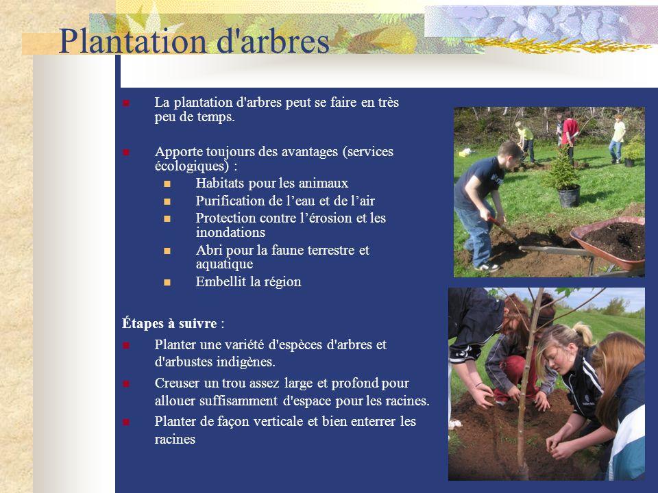 Plantation d'arbres La plantation d'arbres peut se faire en très peu de temps. Apporte toujours des avantages (services écologiques) : Habitats pour l