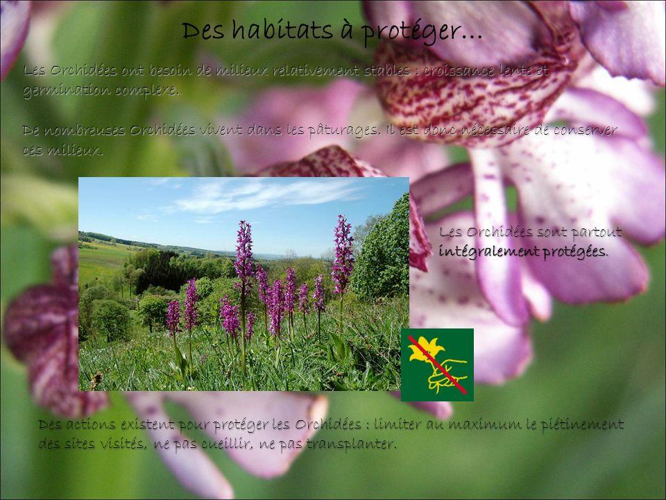 Des habitats à protéger… Les Orchidées ont besoin de milieux relativement stables : croissance lente et germination complexe.