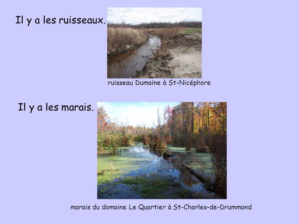 Il y a les ruisseaux. Il y a les marais. ruisseau Dumaine à St-Nicéphore marais du domaine Le Quartier à St-Charles-de-Drummond