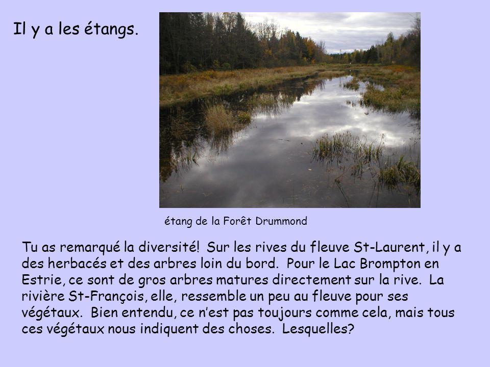 Tu as remarqué la diversité! Sur les rives du fleuve St-Laurent, il y a des herbacés et des arbres loin du bord. Pour le Lac Brompton en Estrie, ce so