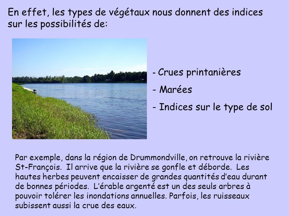 - Crues printanières - Marées - Indices sur le type de sol En effet, les types de végétaux nous donnent des indices sur les possibilités de: Par exemp