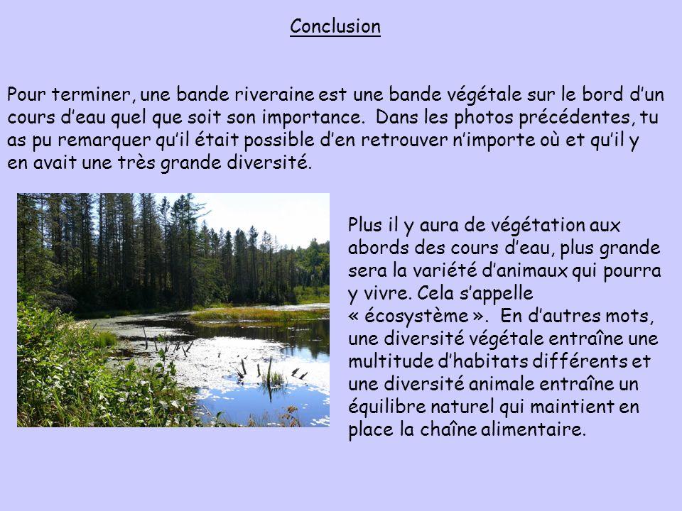 Conclusion Pour terminer, une bande riveraine est une bande végétale sur le bord dun cours deau quel que soit son importance. Dans les photos précéden