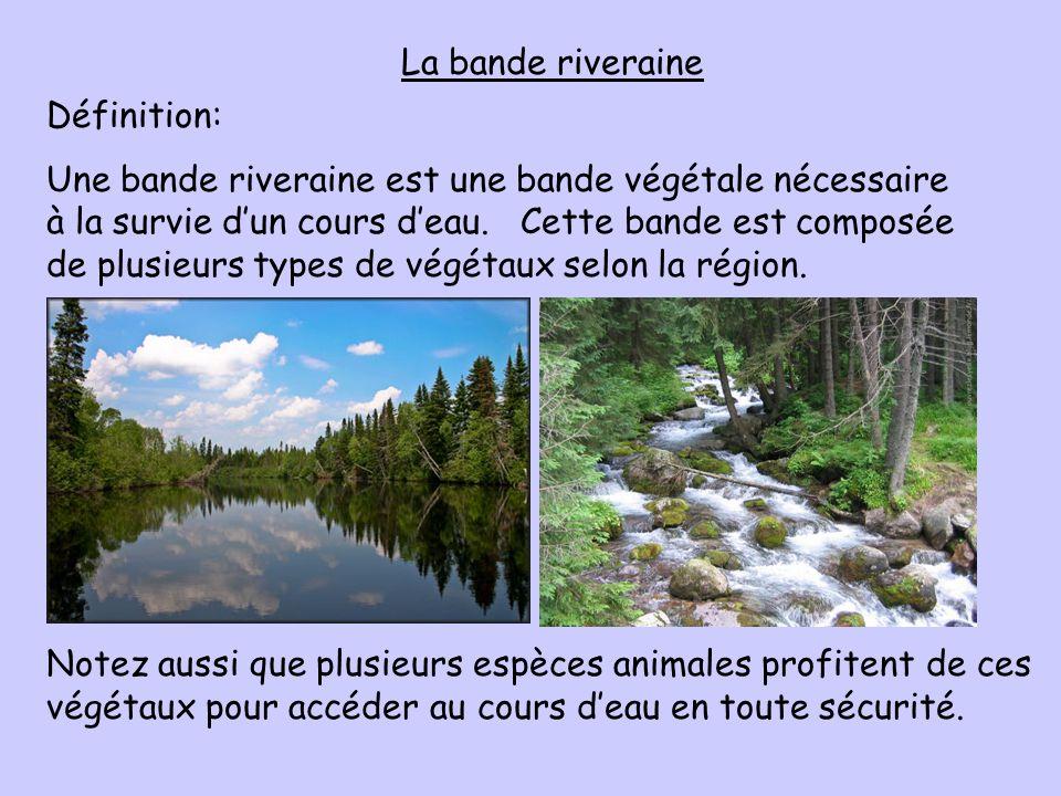 La bande riveraine Définition: Une bande riveraine est une bande végétale nécessaire à la survie dun cours deau. Cette bande est composée de plusieurs