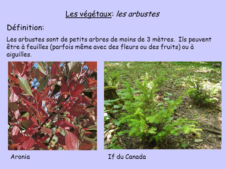 Les végétaux: les arbustes Définition: Les arbustes sont de petits arbres de moins de 3 mètres. Ils peuvent être à feuilles (parfois même avec des fle