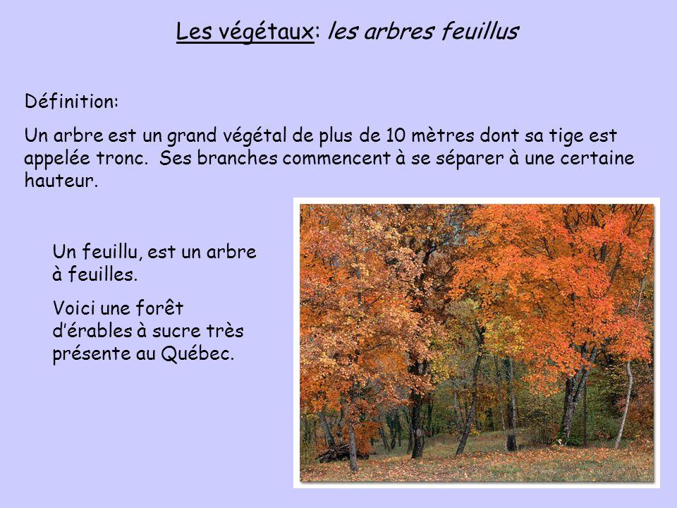Les végétaux: les arbres feuillus Définition: Un arbre est un grand végétal de plus de 10 mètres dont sa tige est appelée tronc. Ses branches commence