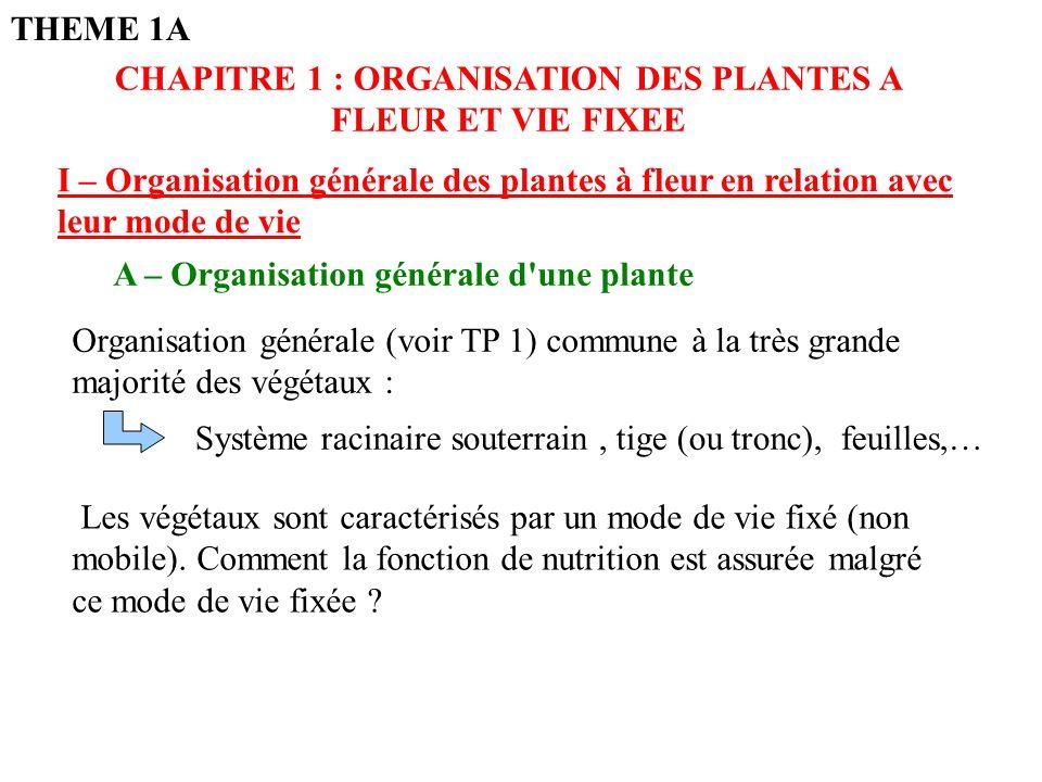 CHAPITRE 1 : ORGANISATION DES PLANTES A FLEUR ET VIE FIXEE I – Organisation générale des plantes à fleur en relation avec leur mode de vie Organisation générale (voir TP 1) commune à la très grande majorité des végétaux : Système racinaire souterrain, tige (ou tronc), feuilles,… Les végétaux sont caractérisés par un mode de vie fixé (non mobile).