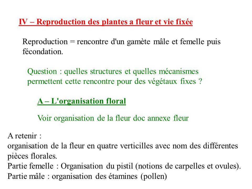 IV – Reproduction des plantes a fleur et vie fixée Reproduction = rencontre d un gamète mâle et femelle puis fécondation.