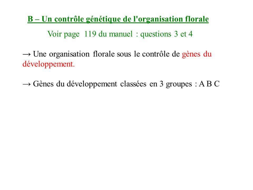 B – Un contrôle génétique de l organisation florale Une organisation florale sous le contrôle de gènes du développement.
