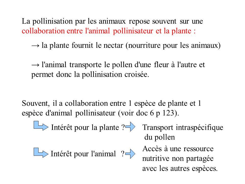 La pollinisation par les animaux repose souvent sur une collaboration entre l animal pollinisateur et la plante : la plante fournit le nectar (nourriture pour les animaux) l animal transporte le pollen d une fleur à l autre et permet donc la pollinisation croisée.