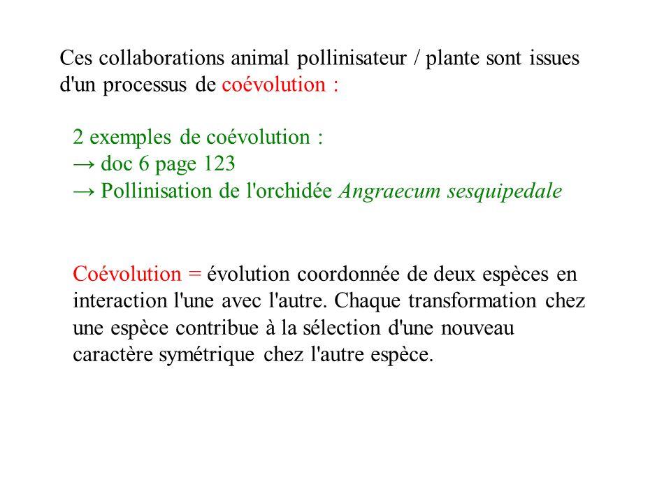 Ces collaborations animal pollinisateur / plante sont issues d un processus de coévolution : Coévolution = évolution coordonnée de deux espèces en interaction l une avec l autre.