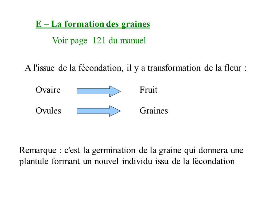 E – La formation des graines Voir page 121 du manuel A l issue de la fécondation, il y a transformation de la fleur : OvaireFruit OvulesGraines Remarque : c est la germination de la graine qui donnera une plantule formant un nouvel individu issu de la fécondation
