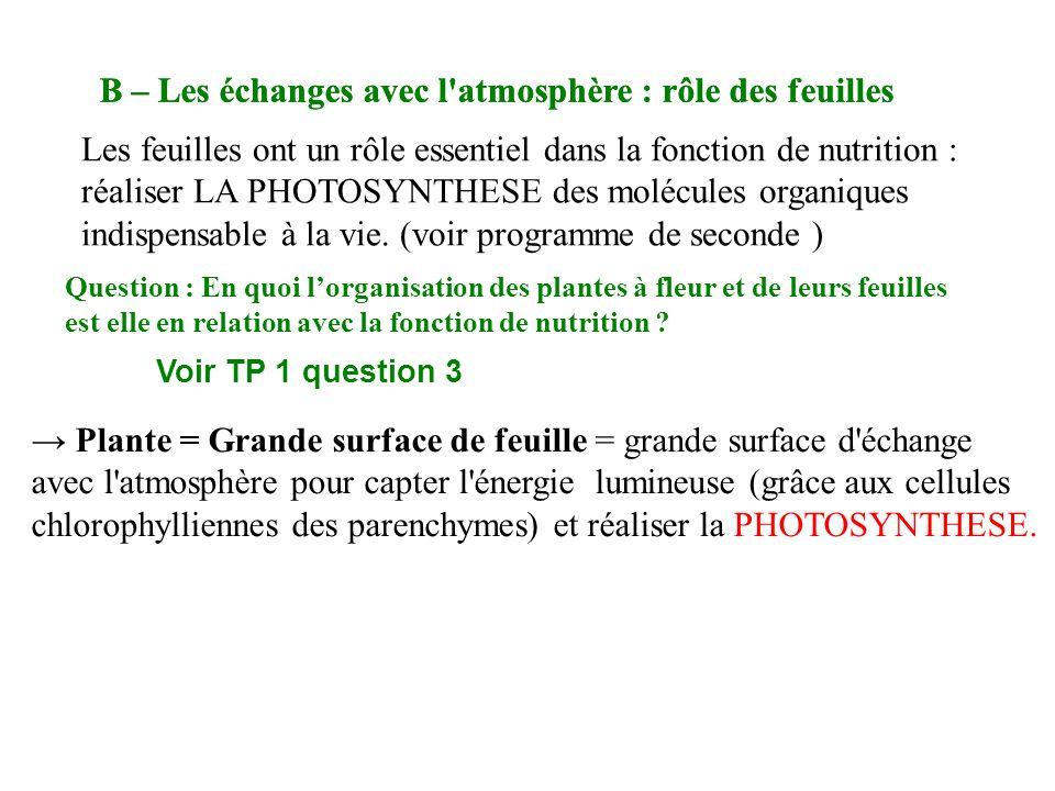 B – Les échanges avec l atmosphère : rôle des feuilles Question : En quoi lorganisation des plantes à fleur et de leurs feuilles est elle en relation avec la fonction de nutrition .