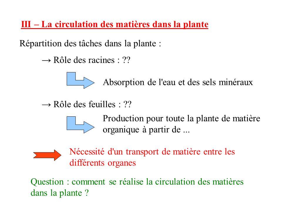 III – La circulation des matières dans la plante Répartition des tâches dans la plante : Rôle des racines : ?.