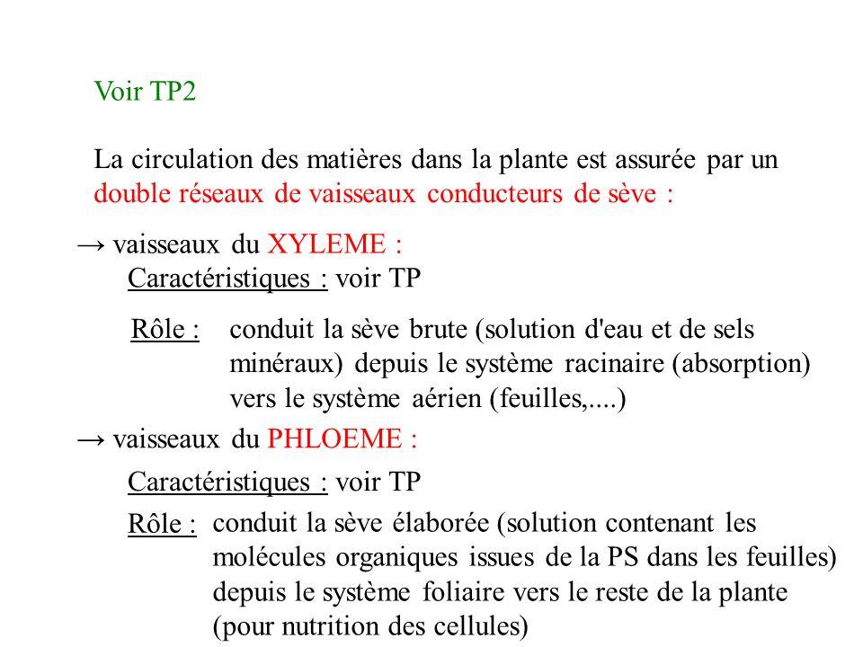 Voir TP2 La circulation des matières dans la plante est assurée par un double réseaux de vaisseaux conducteurs de sève : vaisseaux du XYLEME : Caractéristiques : voir TP conduit la sève brute (solution d eau et de sels minéraux) depuis le système racinaire (absorption) vers le système aérien (feuilles,....) Rôle : vaisseaux du PHLOEME : Caractéristiques : voir TP Rôle : conduit la sève élaborée (solution contenant les molécules organiques issues de la PS dans les feuilles) depuis le système foliaire vers le reste de la plante (pour nutrition des cellules)