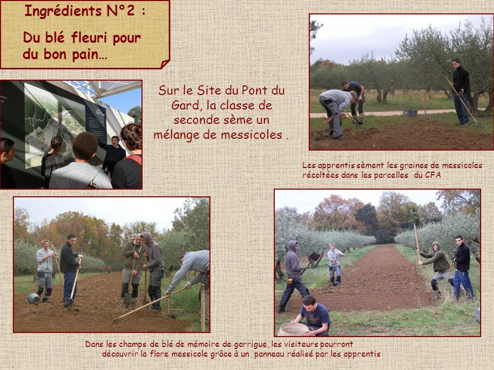 Ingrédients N°2 : Du blé fleuri pour du bon pain… Sur le Site du Pont du Gard, la classe de seconde sème un mélange de messicoles. Les apprentis sèmen