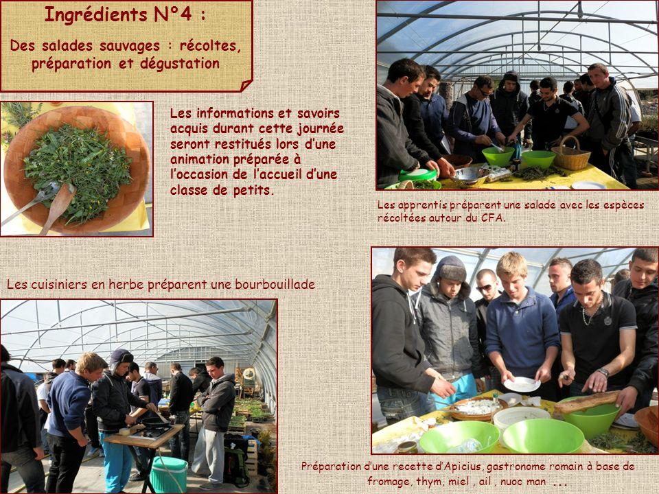 Ingrédients N°4 : Des salades sauvages : récoltes, préparation et dégustation Les apprentis préparent une salade avec les espèces récoltées autour du