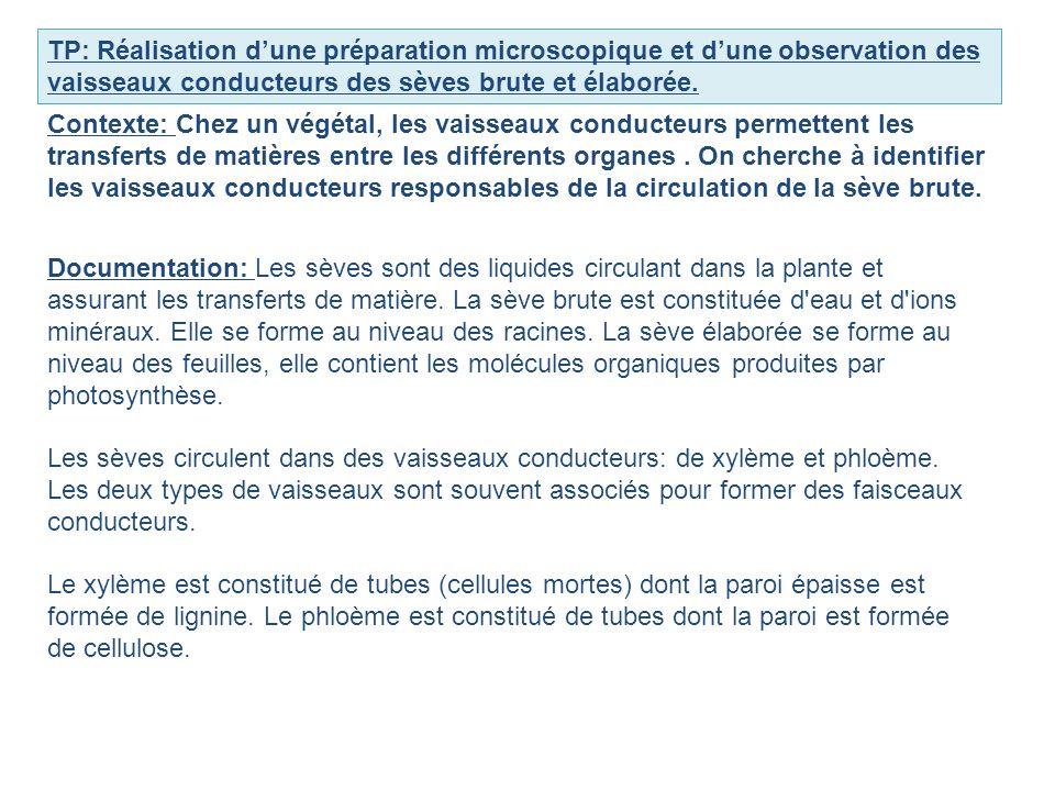 TP: Réalisation dune préparation microscopique et dune observation des vaisseaux conducteurs des sèves brute et élaborée. Contexte: Chez un végétal, l