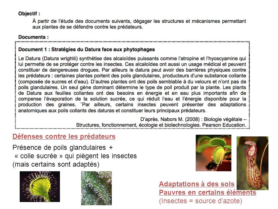 Défenses contre les prédateurs Présence de poils glandulaires + « colle sucrée » qui piègent les insectes (mais certains sont adaptés) Adaptations à des sols Pauvres en certains éléments (Insectes = source dazote)