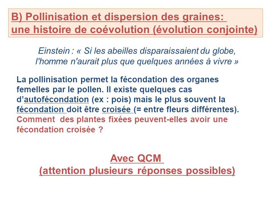B) Pollinisation et dispersion des graines: une histoire de coévolution (évolution conjointe) Einstein : « Si les abeilles disparaissaient du globe, l