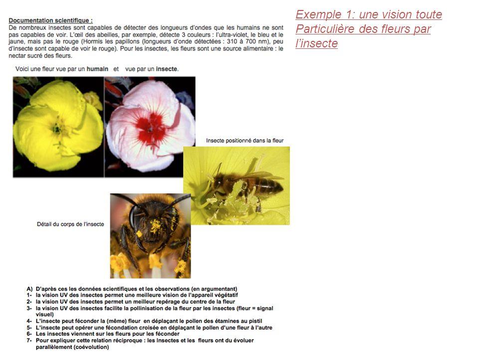 Exemple 1: une vision toute Particulière des fleurs par linsecte