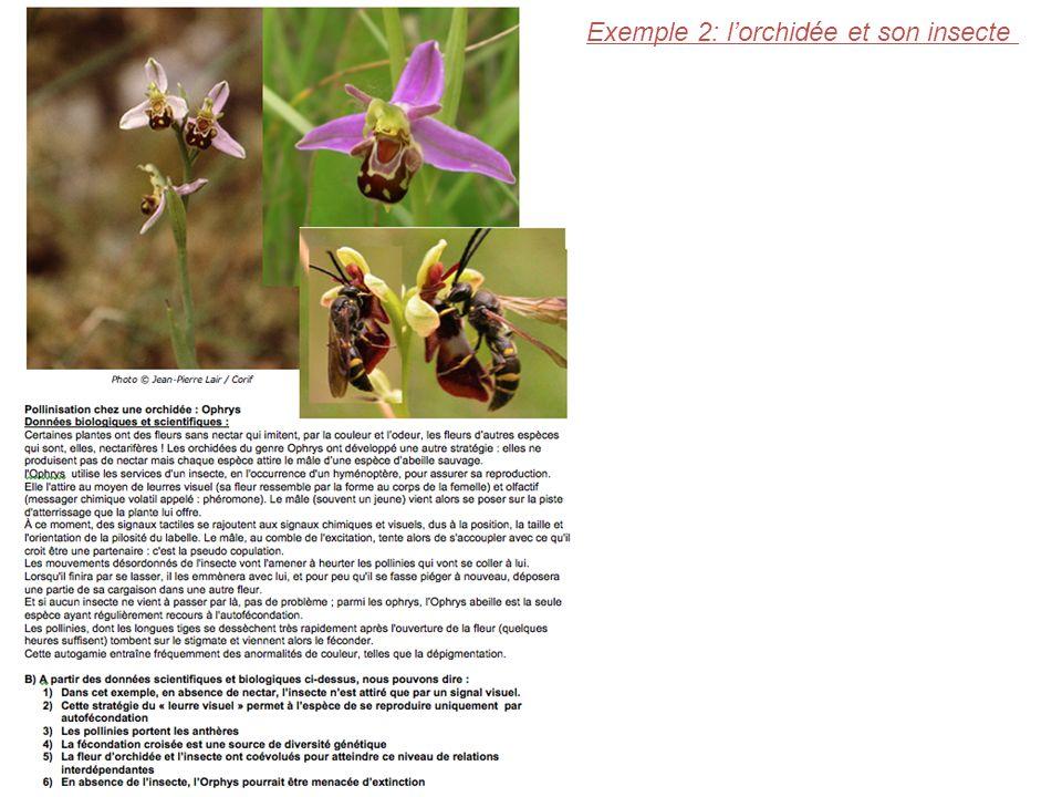 Exemple 2: lorchidée et son insecte