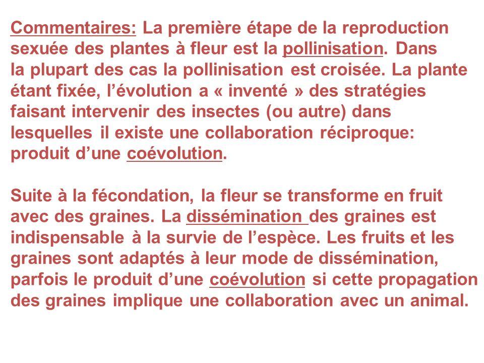 Commentaires: La première étape de la reproduction sexuée des plantes à fleur est la pollinisation. Dans la plupart des cas la pollinisation est crois