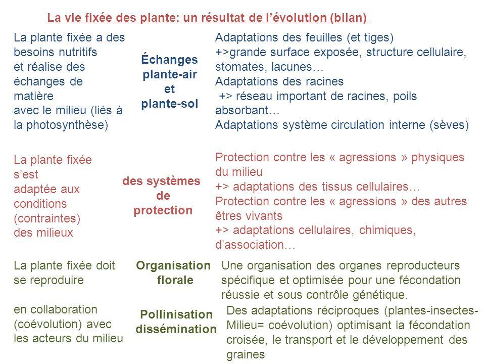 La vie fixée des plante: un résultat de lévolution (bilan) La plante fixée a des besoins nutritifs et réalise des échanges de matière avec le milieu (