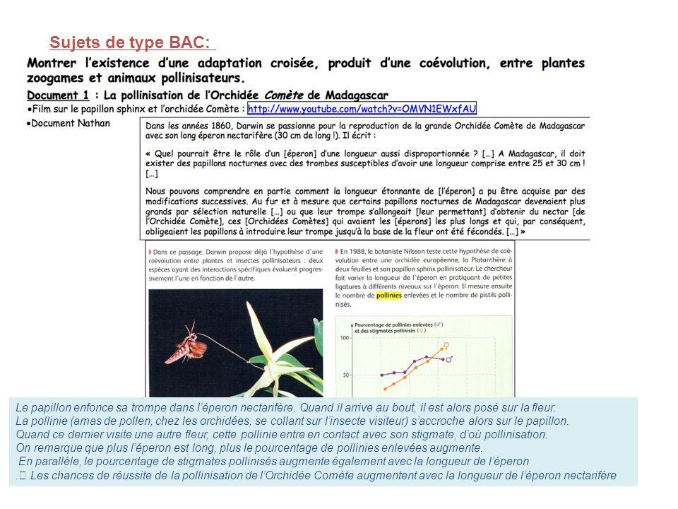 Sujets de type BAC: Le papillon enfonce sa trompe dans léperon nectarifère. Quand il arrive au bout, il est alors posé sur la fleur. La pollinie (amas