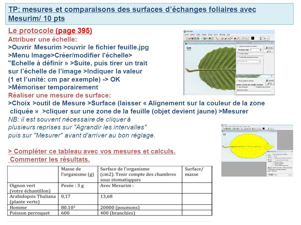 TP: mesures et comparaisons des surfaces déchanges foliaires avec Mesurim/ 10 pts Le protocole (page 395) Attribuer une échelle: >Ouvrir Mesurim >ouvrir le fichier feuille.jpg >Menu Image>Créer/modifier l échelle> Echelle à définir » >Suite, puis tirer un trait sur léchelle de limage >Indiquer la valeur (1 et lunité: cm par exemple) -> OK >Mémoriser temporairement Réaliser une mesure de surface: >Choix >outil de Mesure >Surface (laisser « Alignement sur la couleur de la zone cliquée » >cliquer sur une zone de la feuille (objet devient jaune) >Mesurer NB: il est souvent nécessaire de cliquer à plusieurs reprises sur Agrandir les intervalles puis sur Mesurer avant d arriver au bon réglage.