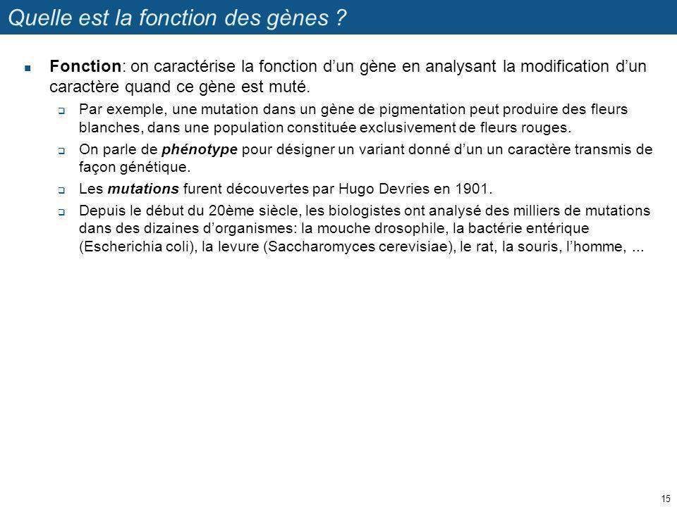 Quelle est la fonction des gènes ? Fonction: on caractérise la fonction dun gène en analysant la modification dun caractère quand ce gène est muté. Pa