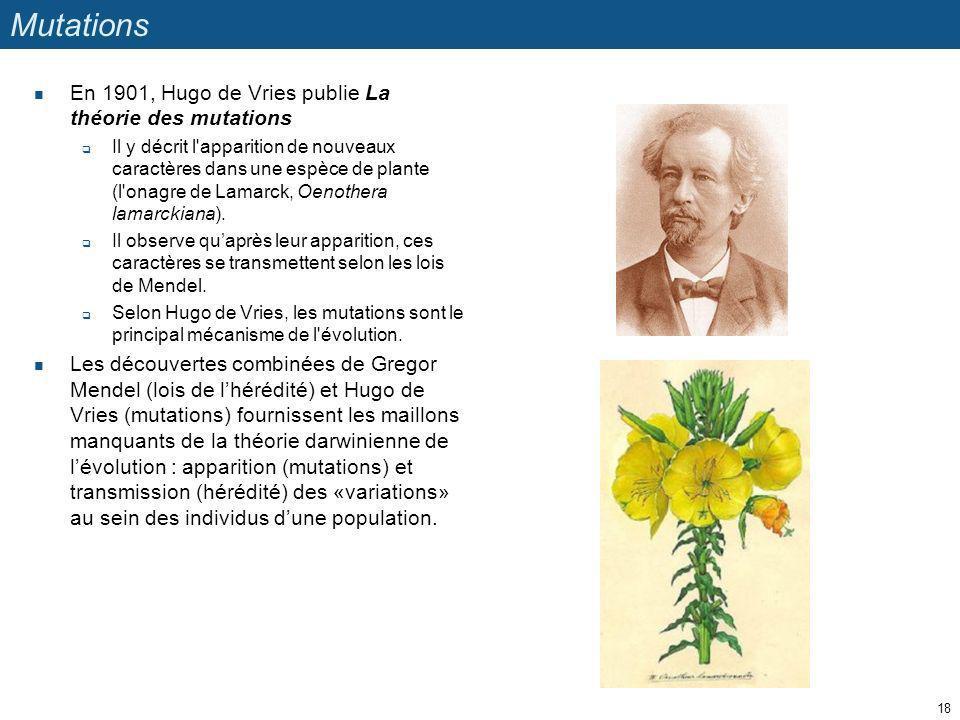 Mutations En 1901, Hugo de Vries publie La théorie des mutations Il y décrit l'apparition de nouveaux caractères dans une espèce de plante (l'onagre d