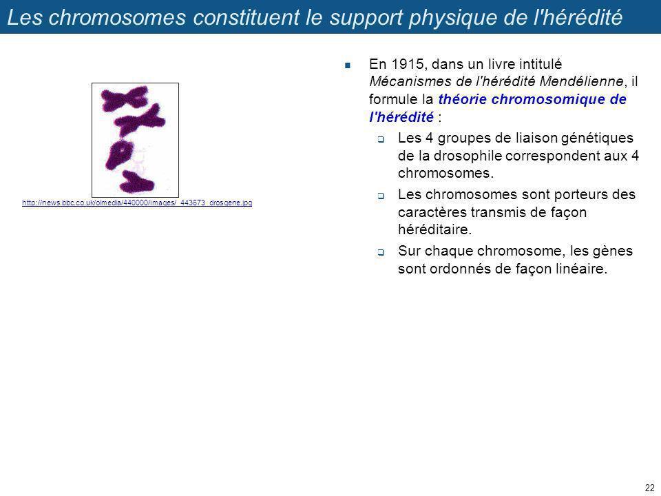 Les chromosomes constituent le support physique de l'hérédité En 1915, dans un livre intitulé Mécanismes de l'hérédité Mendélienne, il formule la théo